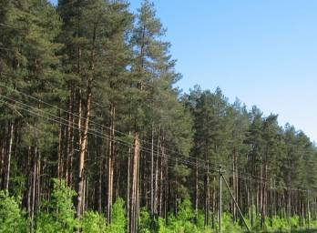 Government approves draft presidential decree on joining Convention on European Forest Institute