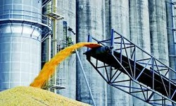 Ukraine threshes almost 48 mln tonnes of grain and leguminous crops as of Oct 20