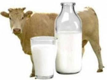Ukraine sees production of milk decline by 0.9%, eggs rise by 1.6% in Jan-Sept