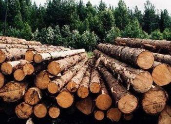 Rada limits domestic use of unprocessed timber, temporarily suspends lumber exports