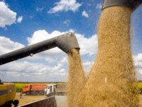 Ukraine's Economy ministry predicts grain harvest of over 68 mln tonnes in 2020