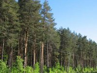 Parliamentary committee removes firewood export ban from bill on preserving Ukrainian forests