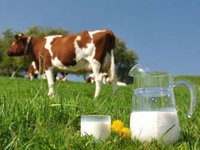 Lawmakers propose introducing zero VAT for milk supplies in Ukraine