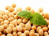 Lawmakers propose returning VAT refunding for exports of rapeseeds, soybeans