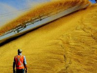 Ukraine exports 36.55 mln tonnes of grain by May 30