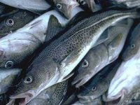 Ukraine, Norway agree to strengthen controls over fish imports, says Agriculture Ministry