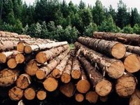 Arbitration Panel finds Ukraine's wood export ban illegal, obliges to cancel it - EU Delegation