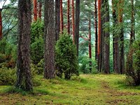 Zelensky signs law on national forest inventory